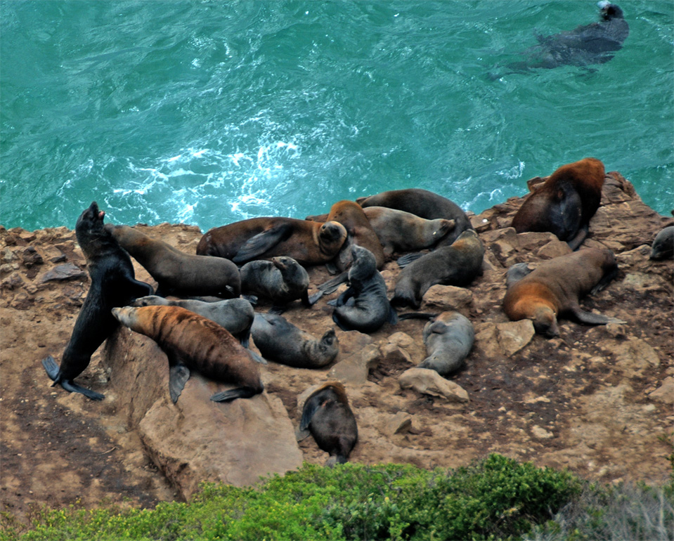 With binoculars you can observe the fur seals by lazing around. After hunting and playing they need a rest.